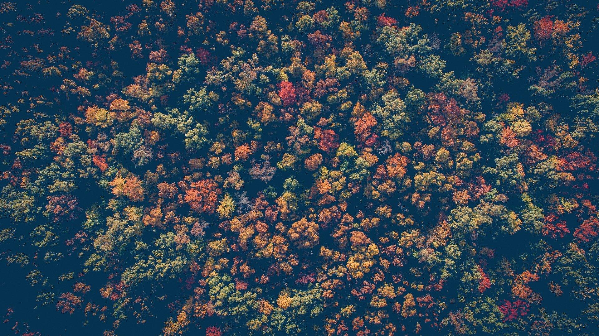 nature arbre foret